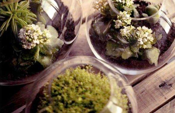 Little gardens on tables