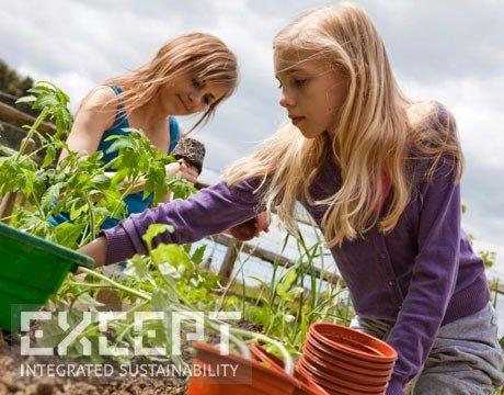 Community garden - Community gardens