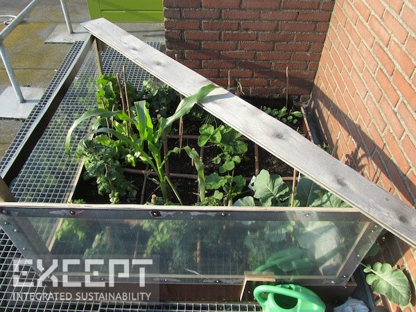 Rooftopgarden - Some of my vegetable experiments