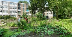 Urban gardens in Schiebroek-Zuid
