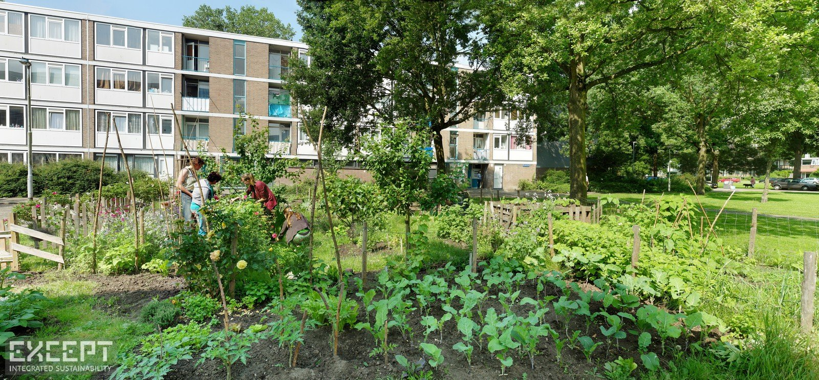Urban gardens in Schiebroek-Zuid - Local residents working together in the Schiebroek-Zuid urban gardens.