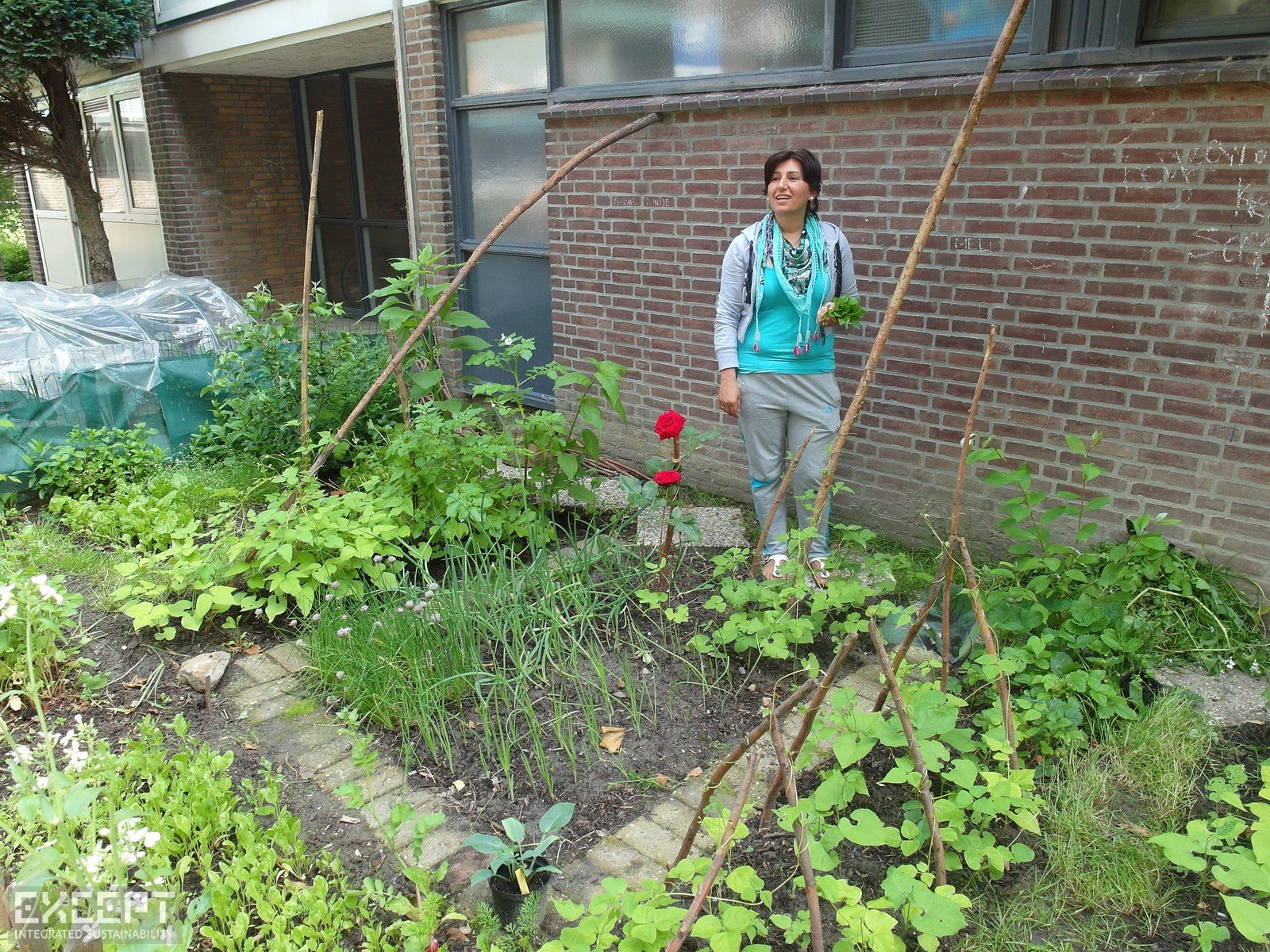 Urban Gardens in Schiebroek-Zuid - Gul's urban garden provides her family with fresh vegetables, with excess to spare.