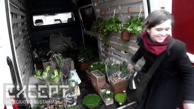 Plant shopping - Plant shopping