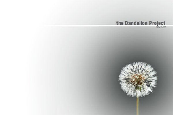 The Dandelion Project