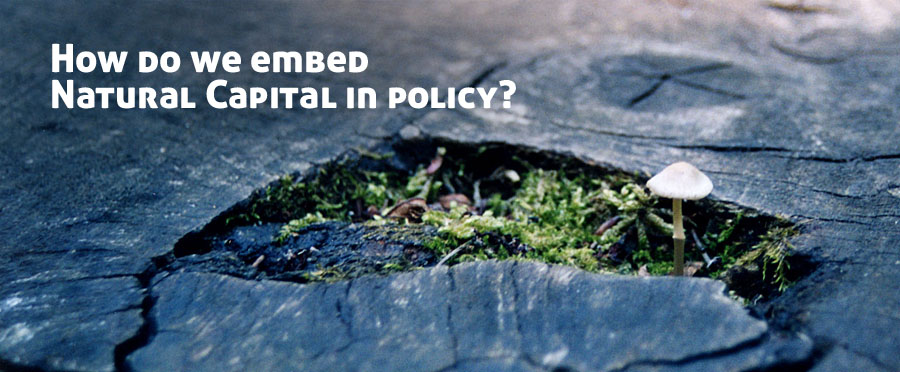 Embedding Natural Capital in Policy